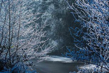 Zon in het bos van Jouke Wijnstra Fotografie