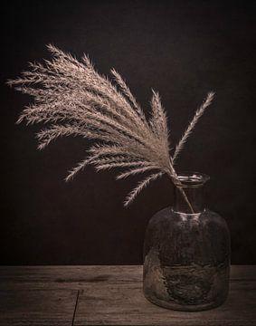 Modern stilleven droogbloemen in vaas: Pluim in een vaas