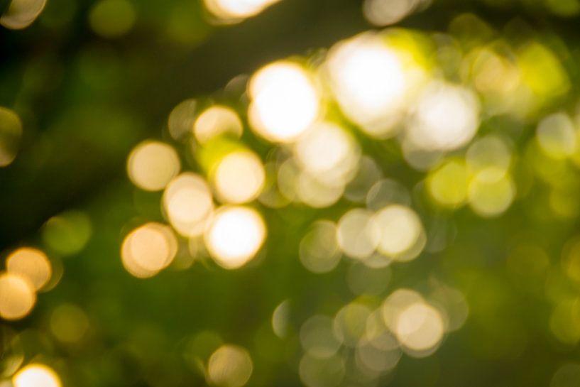 Wakker worden in een bos..in de zomer.. van Pascal Raymond Dorland