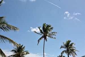 Palmboom in Curaçao von Nats Otten