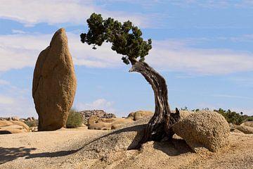 Joshua Tree N.P. van