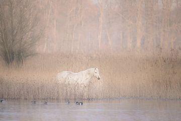 Un cheval blanc au pays des merveilles sur Ellen Metz