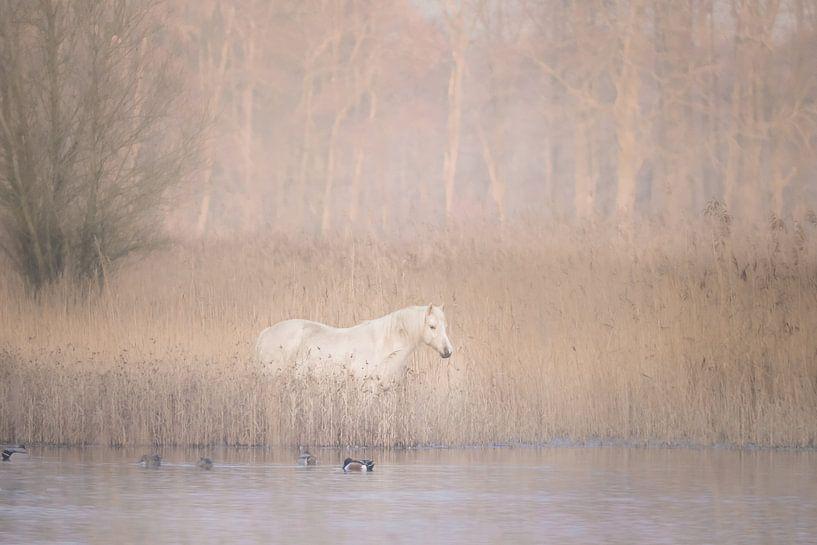 Wit paard in wonderland van Ellen Metz