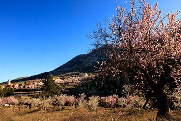 Voorjaar in Spanje van