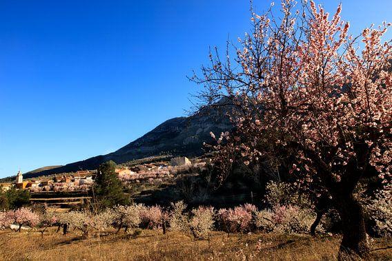 Voorjaar in Spanje