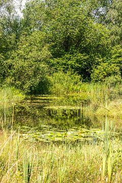 botanical garden in rucphen holland with pond and water lily von Compuinfoto .