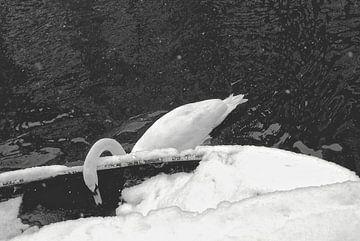 Zwaan in de winter van Marianna Pobedimova