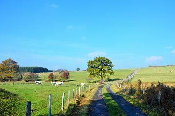Zonovergoten landschap in de Ardennen van Evy Coppens