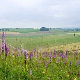 Calcareous Grassland with Fragrant Orchid - Gymnadenia conopsea sur Mark Meijrink