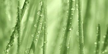 Wassertropfen von Violetta Honkisz