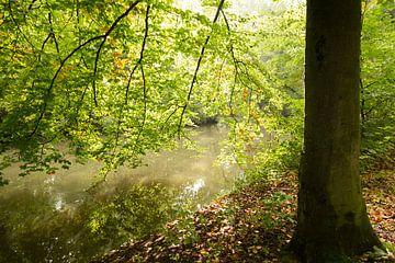 Het herfstige blad van een beukenboom weerspiegeld in het water van de Kromme Rijn van Marijke van Eijkeren