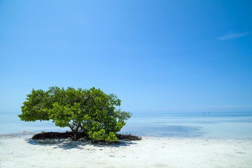 FLORIDA KEYS Einsamer Baum von Melanie Viola