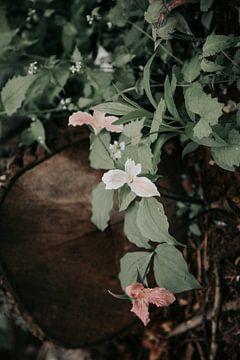 Verträumte Blumen in Blüte von studio KELBEL