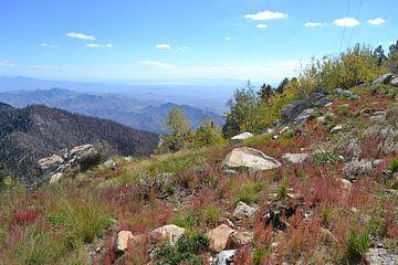 Arizona, in den Bergen in der Nähe von Safford von Bernard van Zwol