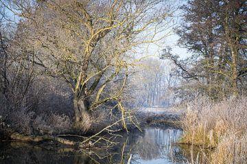 Winterse sfeer aan de rivier van Jürgen Schmittdiel Photography