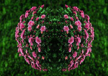 Bolchrysant von CreaBrig Fotografie