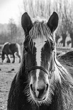 Portret van een paard van Geert van der Sanden