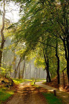 Pad door een beukenbos landschap tijdens een mistige herfstochtend van Sjoerd van der Wal
