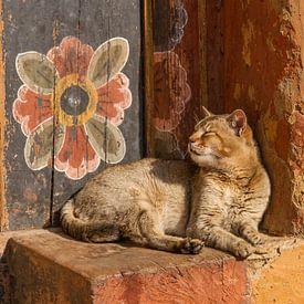 Chat de temple avec fleur de mur sur Erwin Blekkenhorst