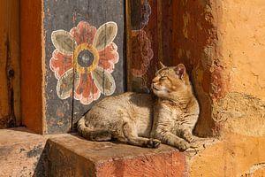 Tempel poes met muurbloem