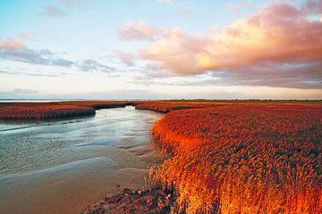 De fascinerende landschap van de Eemsmonding van Klik! Images
