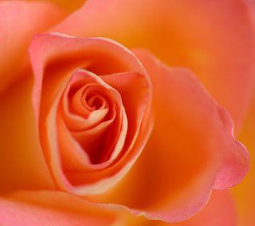 Oranje roos (macro) van Fotografie Jeronimo