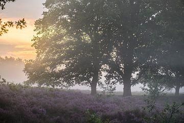 bomen op de paarse heide van Tania Perneel