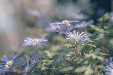 Blumen Teil 111 von Tania Perneel