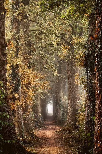 Fancy Lane van Lars van de Goor