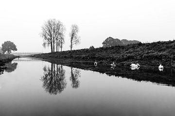 Zwanen en spiegeling von Arjan Mak
