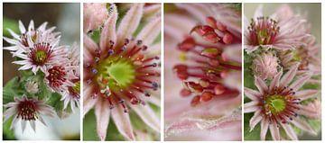 Collage roze bloemen langwerpig von Gonnie van Hove