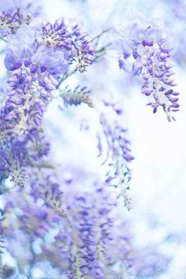 Blauwe regen van Francis Dost