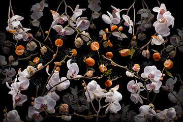 Orchidea clementina von Olaf Bruhn