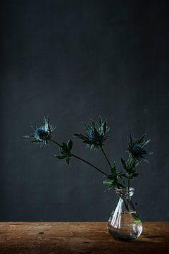 Foto print  distels in vaas tegen donkere achtergrond   botanisch