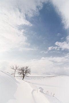sneeuw von Frans Scherpenisse