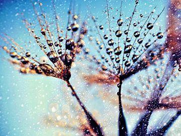 Paardebloem - Magie na de regenbui van Julia Delgado