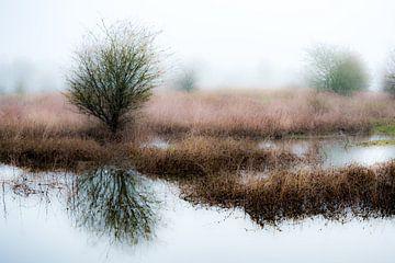 Uiterwaardenpark Meinerswijk, Arnhem van Eddy Westdijk