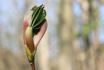 Ontluiking van het voorjaar van Nadia Langenberg