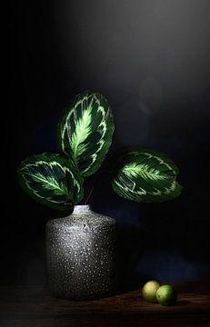 Die Natur als Künstler. Stilleben mit Blättern und Limetten von Saskia Dingemans