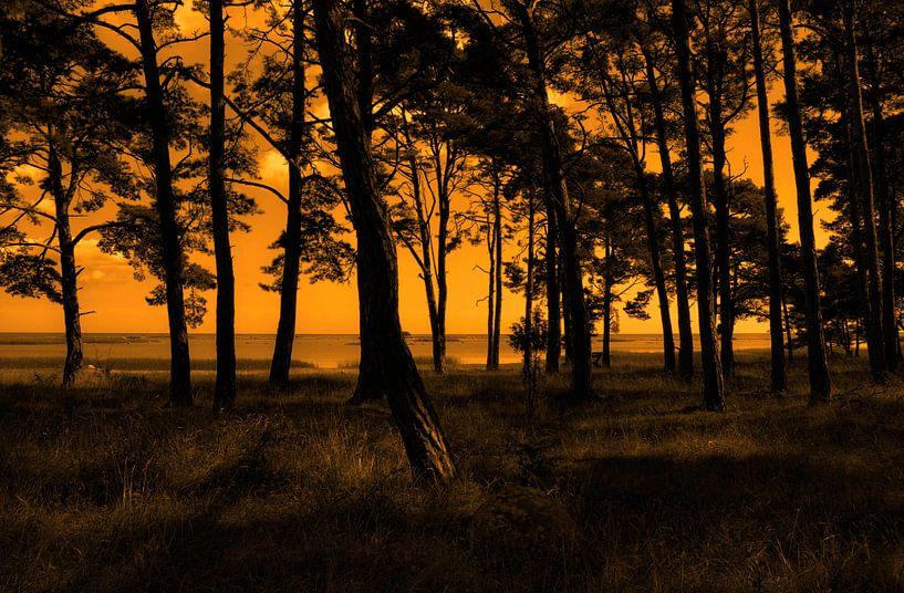 Gotland bos van Rebel Ontwerp