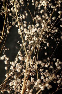 Gypsophila von Melanie Schat