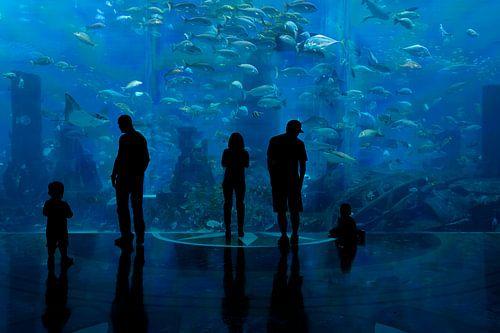 Aquarium van Tilo Grellmann