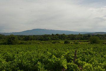 Wijngaard in de Provence van Cor Pater