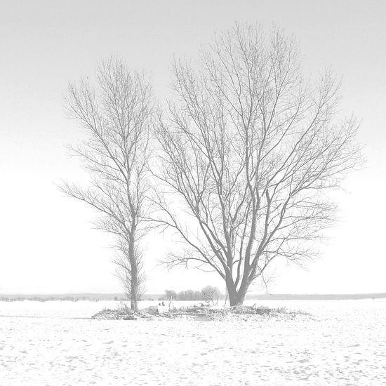 Zwei Bäume im Schnee