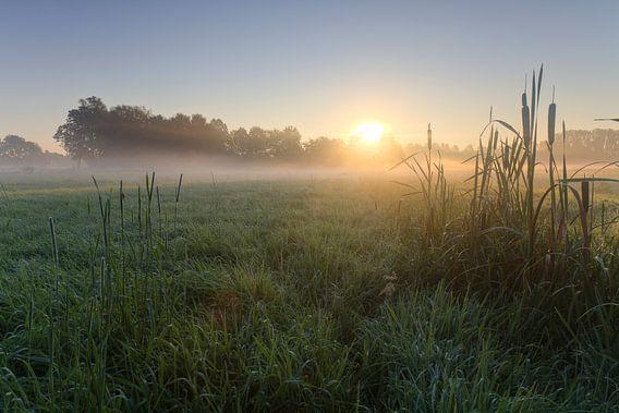 Morgenstond