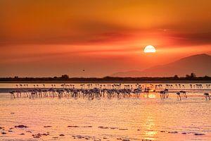 Zonsondergang op Kos Island tussen de mooie flamingo's van