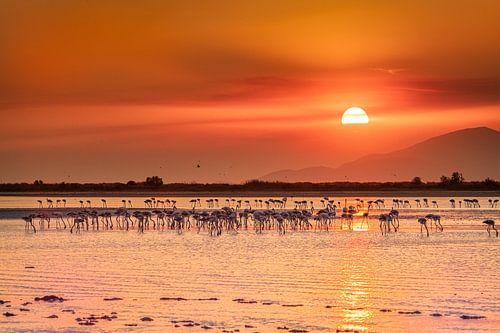 Sonnenuntergang auf der Insel Kos zwischen den wunderschönen Flamingos von