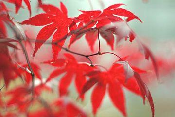 Herfst bladeren van Marianna Pobedimova