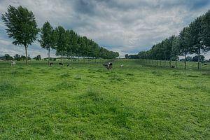 cow heaven van