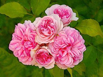 Rosige Rose von Caroline Lichthart